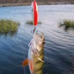 Как ловить окуня, способы ловли