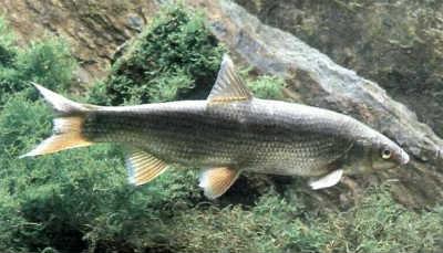 Рыбалка. Энциклопедия Рыболова - журнал (Ашет)