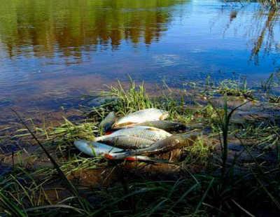 Рыба язь в улове на берегу