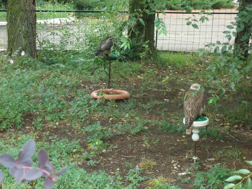 Птицы в заповеднике
