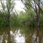 Ловля голавля на малых реках, как на них нужно искать рыбу