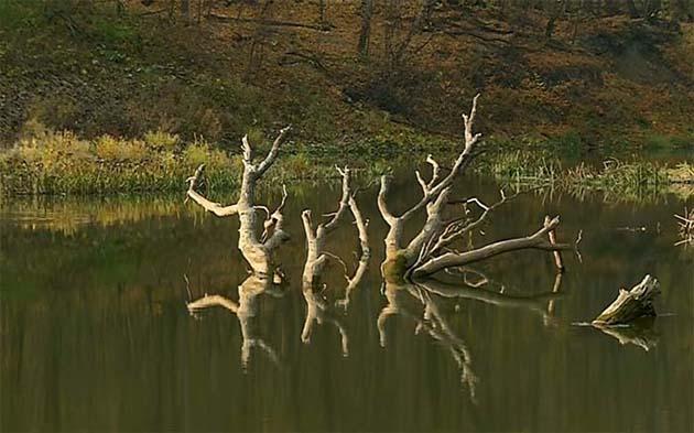 Ловля голавля на малых реках в коряжнике