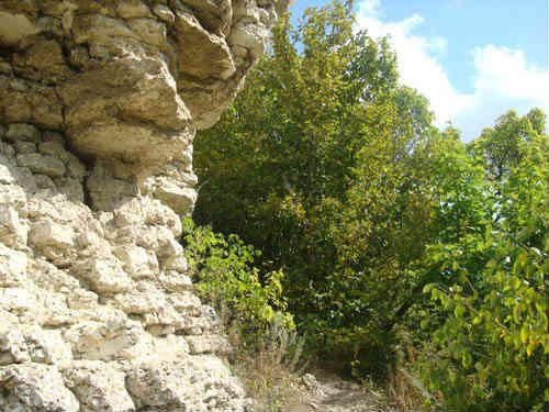 Воргольские скалы и деревья