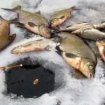 Зимняя ловля леща, как найти рыбу