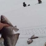 Ловля синца зимой, на какие снасти  нужно ловить