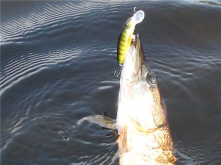 рыбалка в тамбовской области где ловится