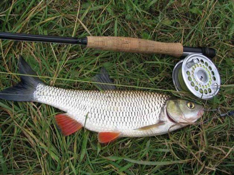 рыбалка на мармеладного