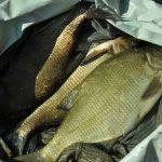 Как ловить рыбу весной, где ее лучше искать