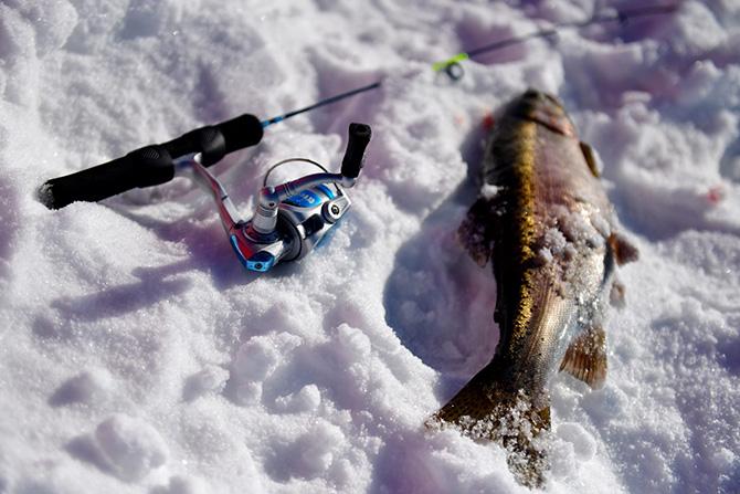 Рыба на снгеу в глухозимье
