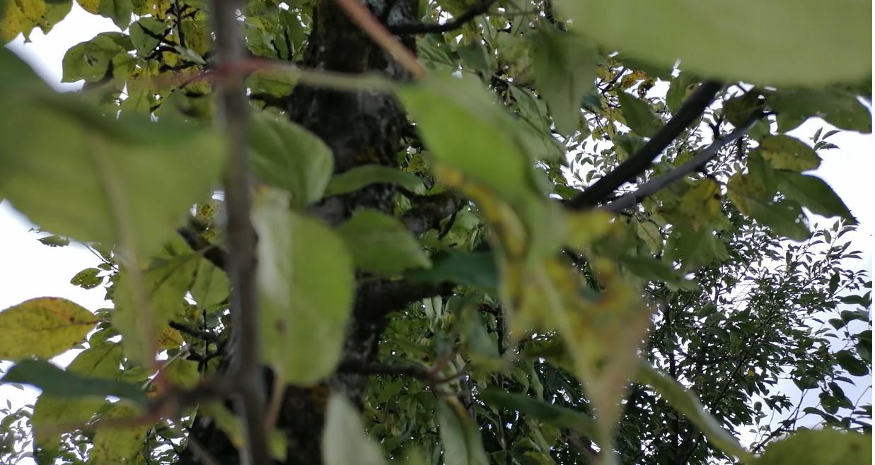 Уход за яблоней удобрениями